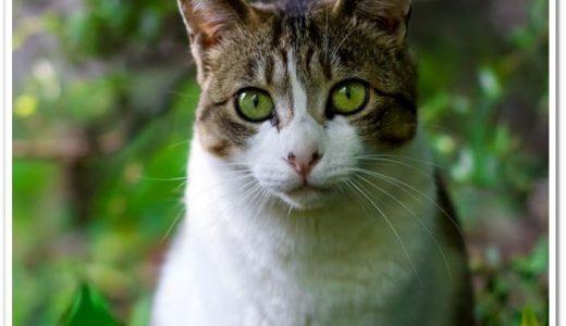 飼い猫のマダニ感染の初期症状や死亡する確率は?病状の判断や予防法も!