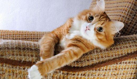 ネコ家具ソファとベッドのメーカーと値段は?購入方法やサイズも調べた!