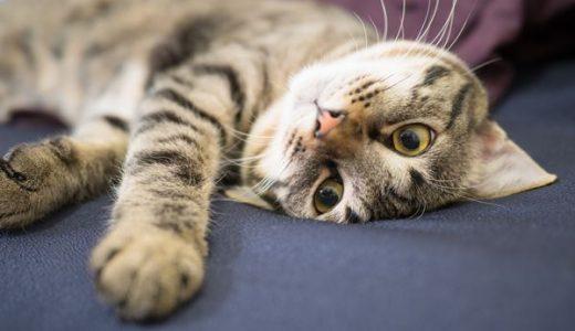 映画ねことじいちゃんの猫ベーコンの性格や年齢は何歳?演技の評判も!