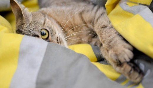 映画【夏への扉】キジトラ猫の種類と名前は?過去の出演作品まとめ!